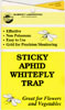 Sticky Yellow Traps Catch Flying Fungus Gnats
